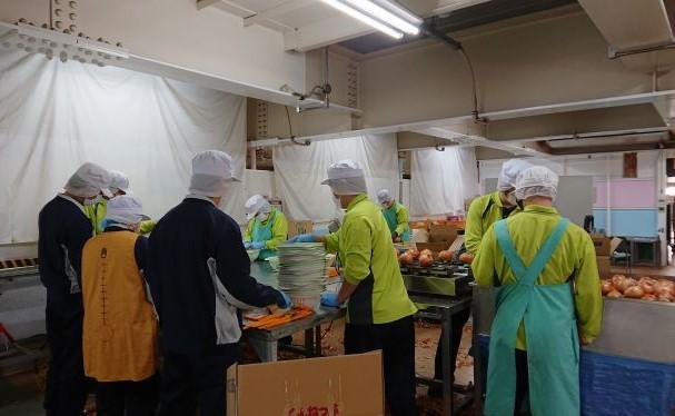 玉ネギの選別、計量、検品、包装業務に取り組む社員
