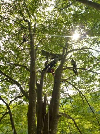 木の上には普段見れない非日常の世界が広がる