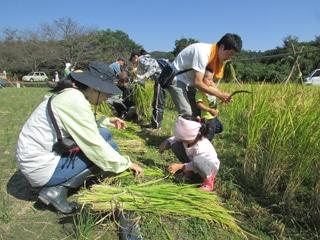 稲刈りで田舎暮らしを体験