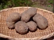 奥多摩の農園で「幻のジャガイモ」植え付け 試食体験とジビエや山菜のBBQ