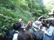 御岳山でコケ観察と歴史を体験できる自然講座 夜は宿坊で1泊