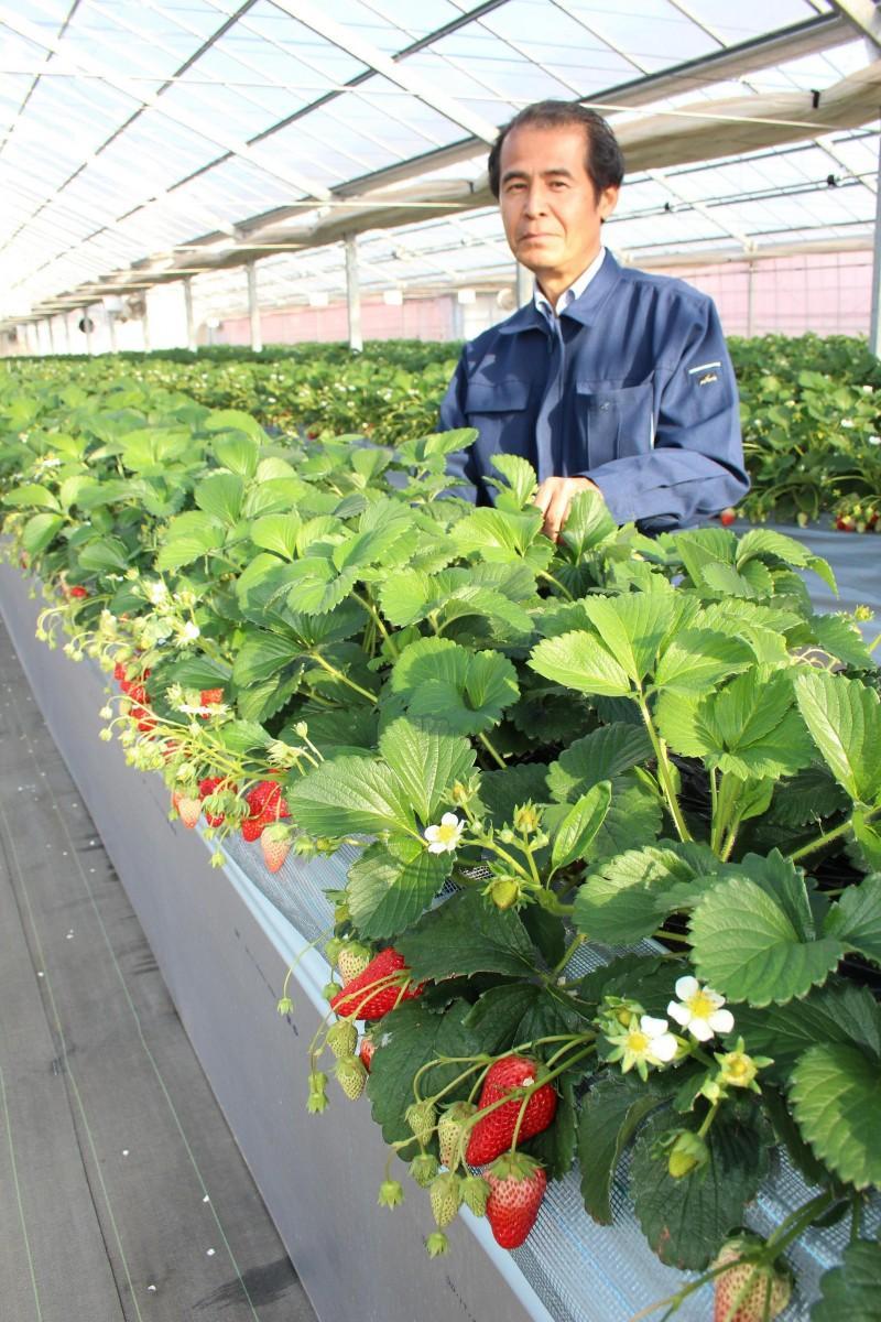 瑞穂町に初のイチゴ摘み取り観光農園「くりりんベリー」