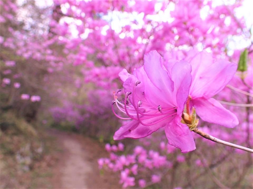 御岳山に咲く春の花