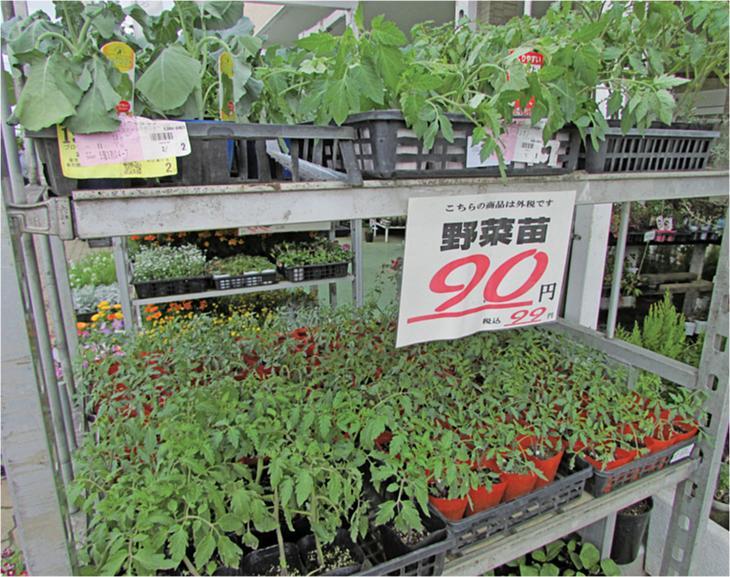 手頃な価格の野菜苗