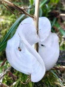 御岳山の冬の芸術「氷の花」を探すツアー 昼食には御師料理