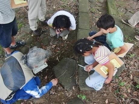 ナメクジが作った自然の迷路を観察