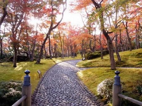 石畳の回廊が巡るコケ庭(11月16日撮影)