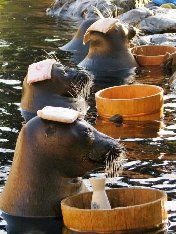 3頭のアザラシが「温泉トリオ」を披露