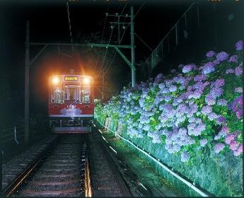 再開する「夜のあじさい電車」