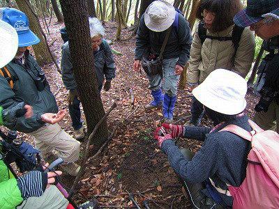 森の中で行われる観察会の模様
