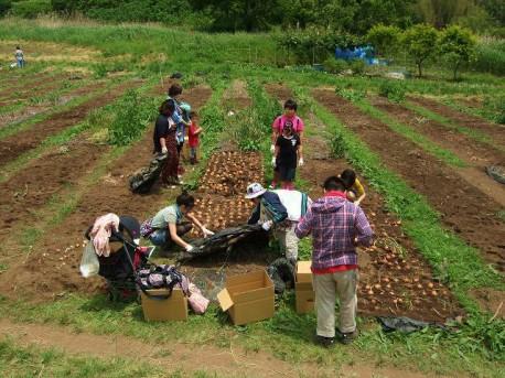 「小田原オーナー園部会」が行う「たまねぎオーナー園」作業の様子