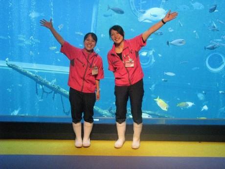 箱根園水族館の「ツインマーメード」