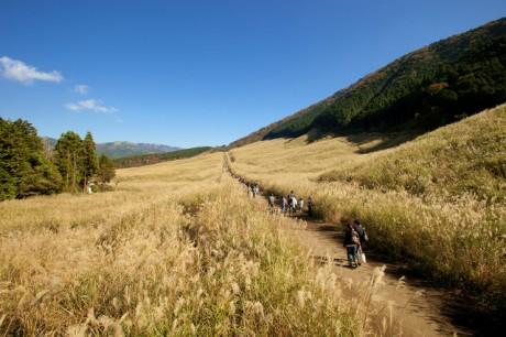 「仙石原のすすき」の風景