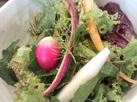 収穫されたオーガニック野菜