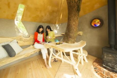 樹齢300年のクスノキに作られたツリーハウス