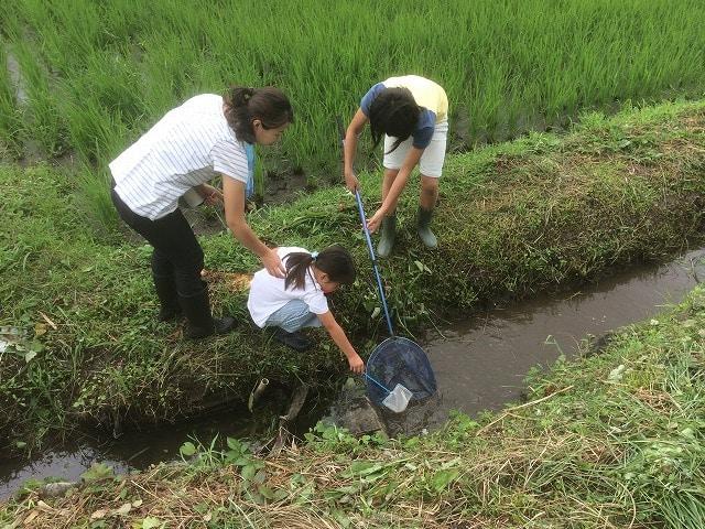 里山の田んぼで「田んぼの小魚すくい」の準備