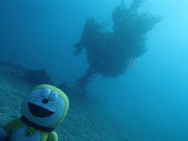 海底のクリスマスツリー(撮影=野瀬勝利さん)