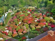 箱根・山のホテルのツツジが間もなく見頃に 12日現在、三分~四分咲き