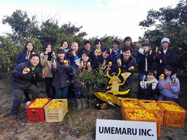 湘南ゴールドの収穫作業に参加した「東大みかん愛好会」メンバー(2月の様子)