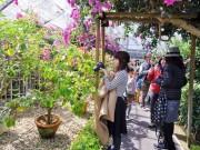 箱根でアジサイや彫刻の森をテーマに旅フォト企画 カフェでのランチも