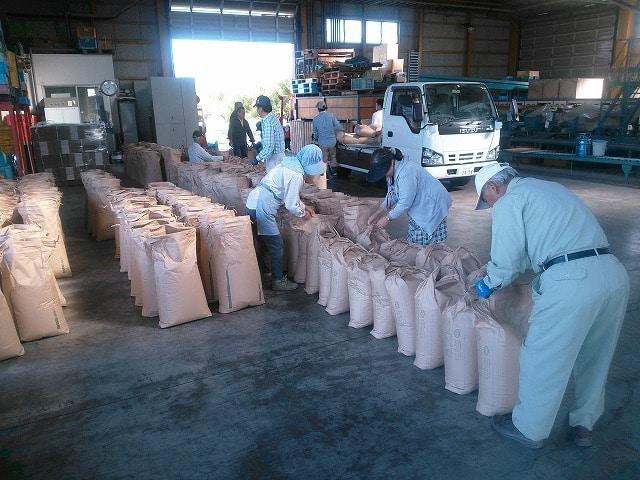 JAかながわ西湘農業協同組合の出荷作業
