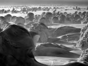 箱根写真美術館で望月久さん写真展「FOREST・森」 自然の持つ神秘性描く