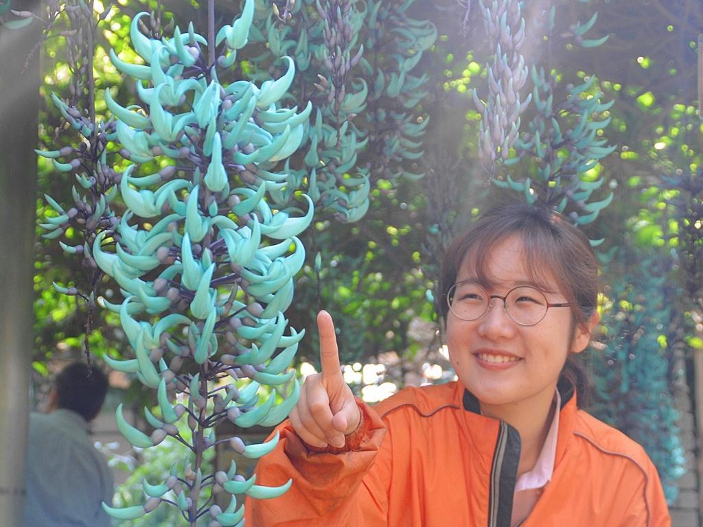 同園スタッフの中西七緒子さんと咲き誇るヒスイカズラ