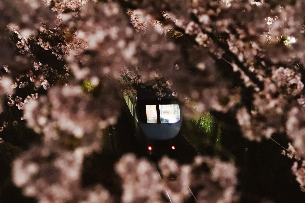 桜の中を走る御殿場線(撮影=村山寛明さん)