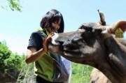 山北町で恒例「田んぼアート」の田植え 酪農を始める島崎薫さんを応援