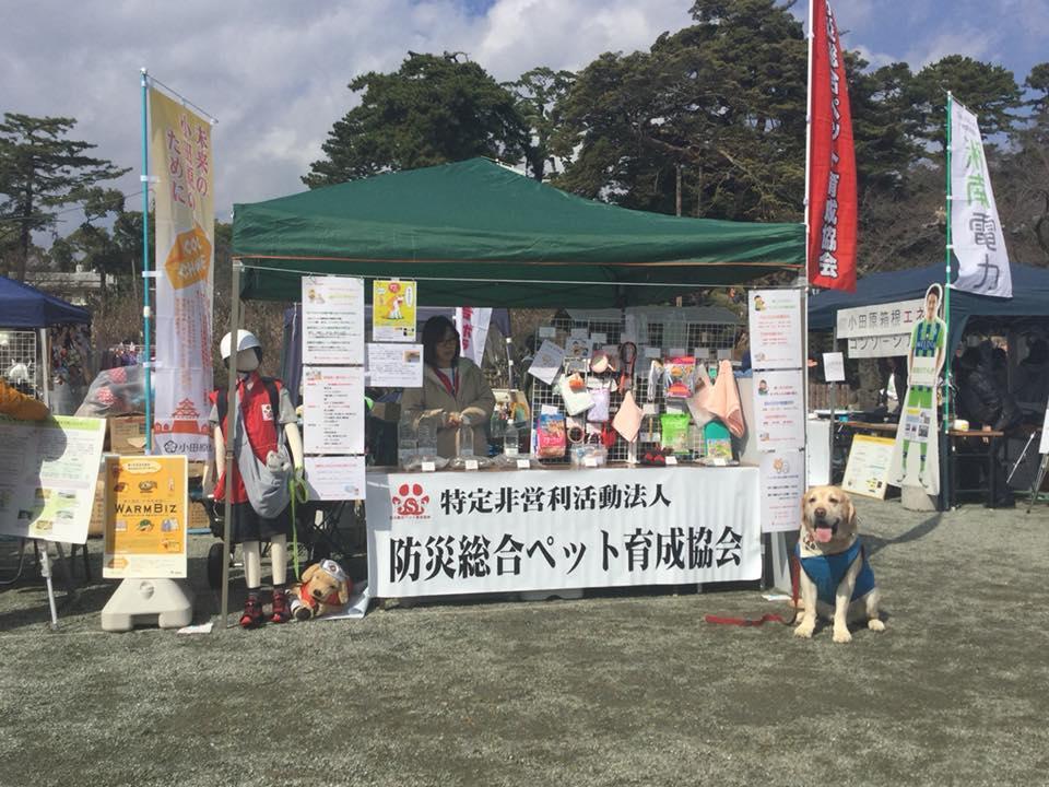 「防災総合ペット育成協会」の活動の様子