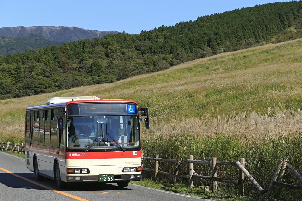 ススキを鑑賞できる「仙石すすきバス」