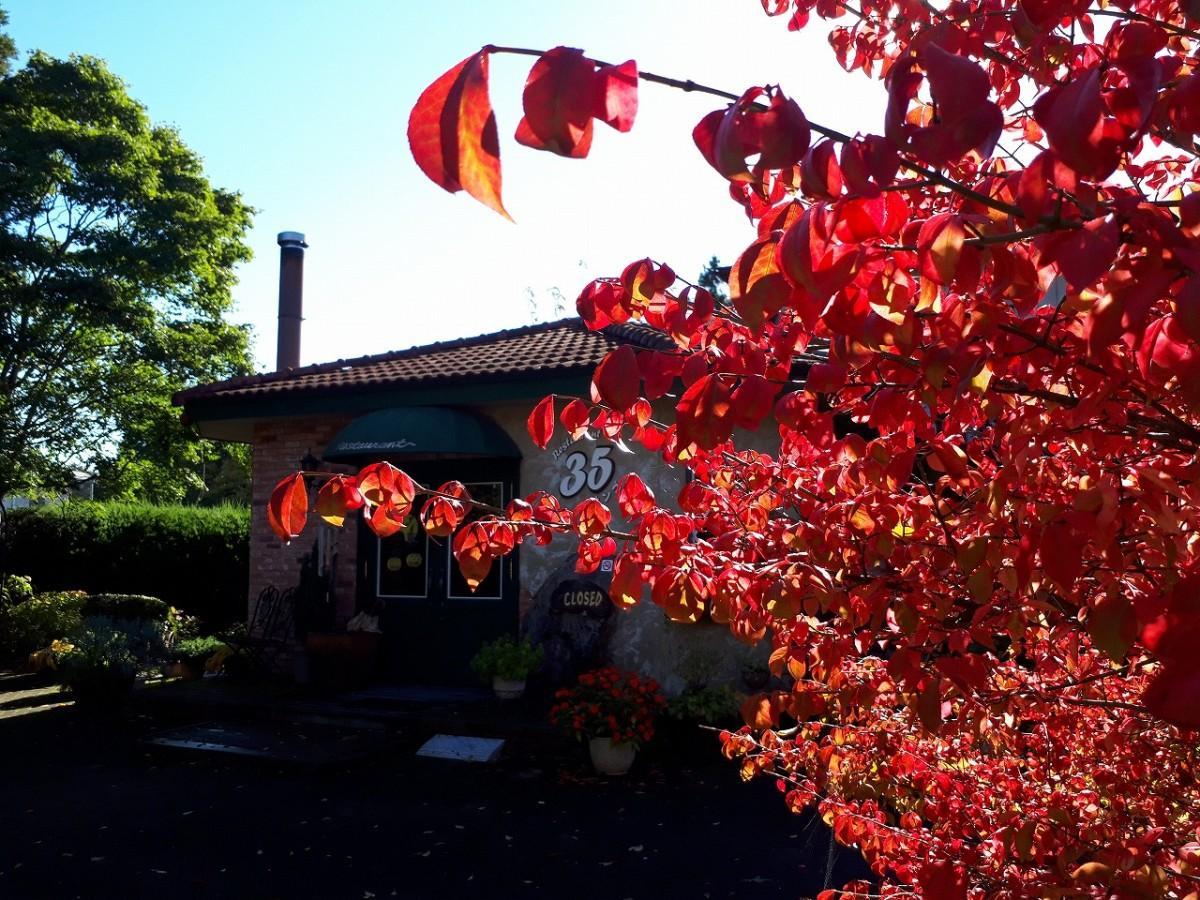 紅葉で「ニシキギ(錦木)」の木が赤く染まっている