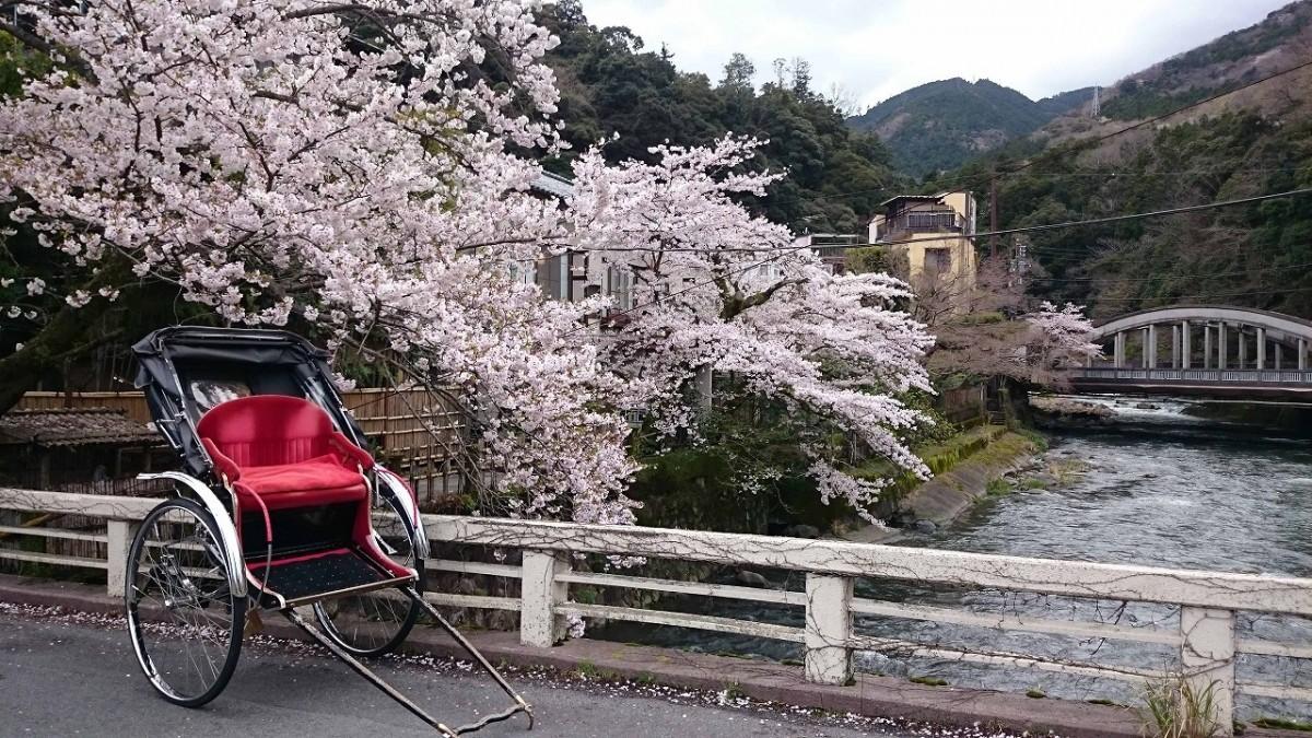 春の箱根湯本で人力車