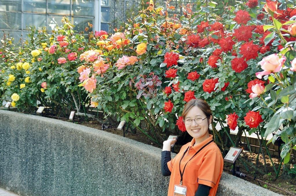 「これからは春バラが一番きれいなとき」と勧める中西七緒子さんと春バラ