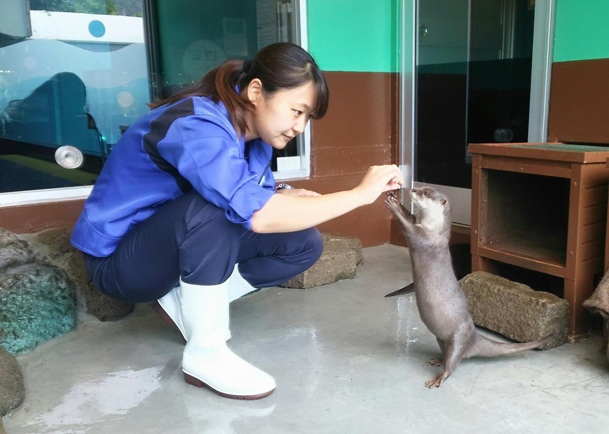コツメカワウソを担当する飼育員の小林明音さんから食事をもらうハナの様子