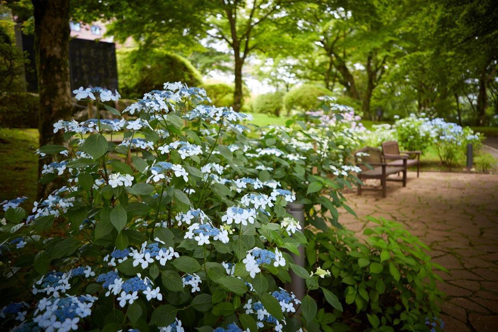 散策路に沿って25種230株が咲き誇る