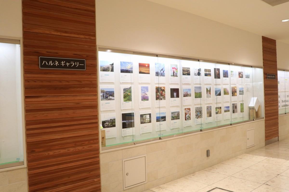 第2回「小田原のチカラ写真展」。1700枚が集まり、その中から70枚が選ばれ展示されている
