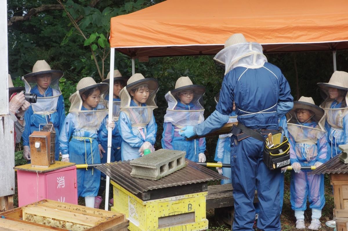参加する子どもたちは面布帽子をかぶり、巣箱の観察や採蜜作業を行う