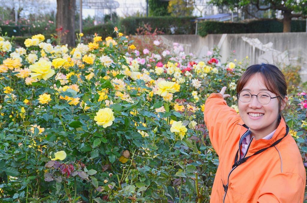 「秋バラが見頃を迎えます」と呼び掛ける小田原フラワーガーデンの中西七緒子さん