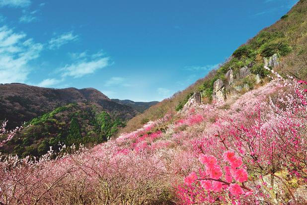 梅の季節には絶景となる「梅の宴」