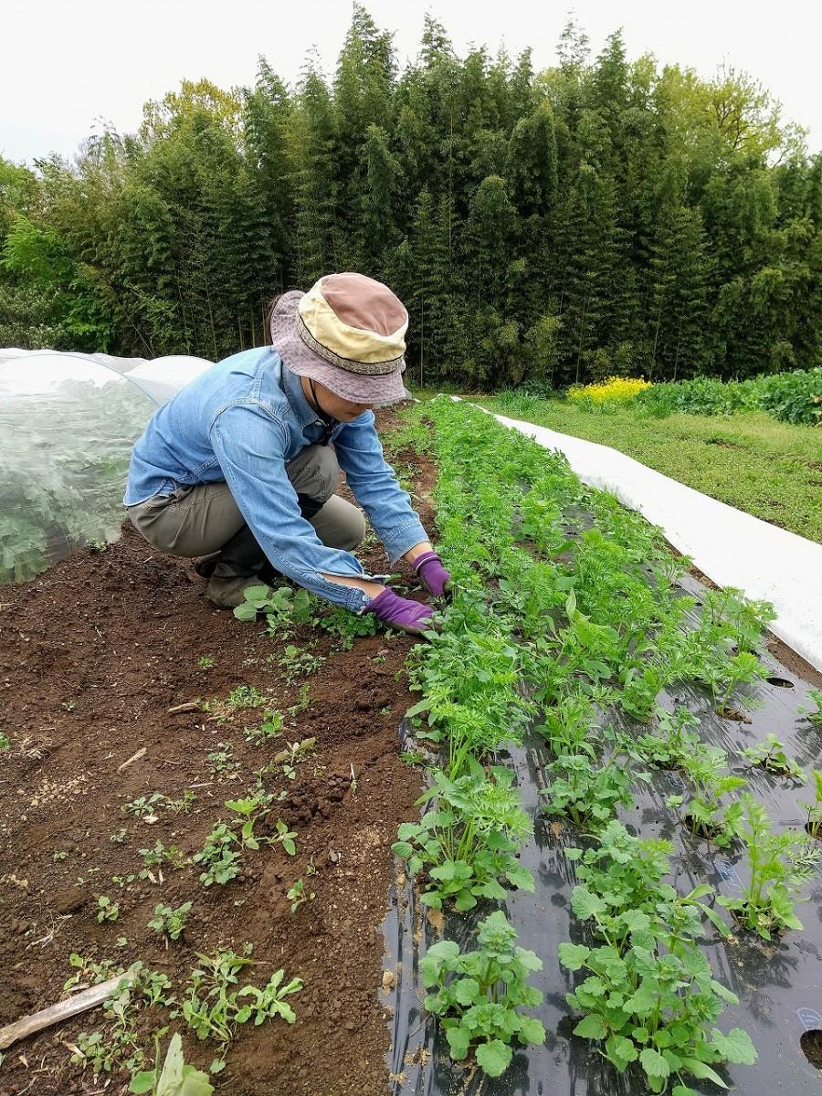 「さとえむ農園」で農作業をする宍室恵美さん