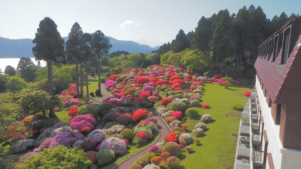 休館中の「山のホテル」庭園で咲き誇るツツジ(撮影=5月13日)