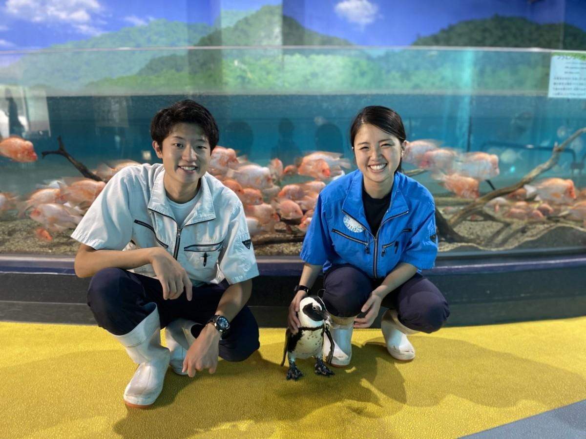 飼育員の大山拓哉さん(左)、ケープペンギンの「フクちゃん」(中央)、小杉智花さん(右)