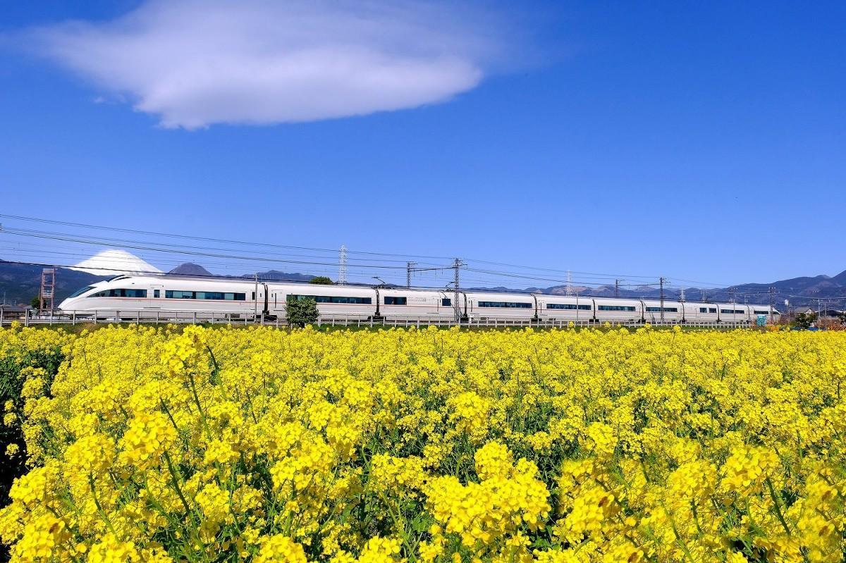 菜の花と富士山を借景にして快走する小田急ロマンスカー(撮影=2021年3月14日・小澤宏さん)