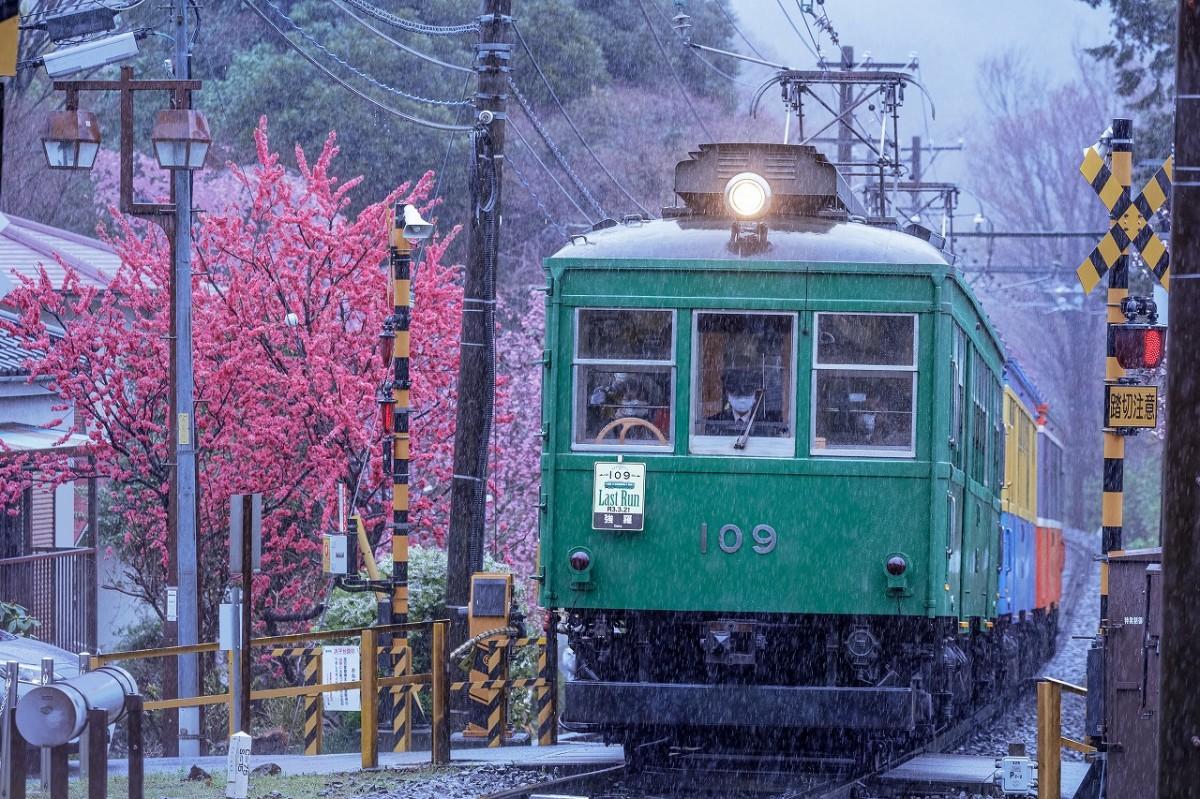 箱根登山鉄道モハ2形109号のラストラン(撮影=大橋史明)
