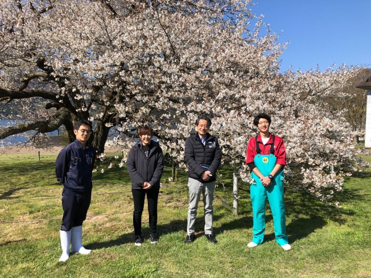 「湖畔の一本桜」を守るスタッフ。左から冨江大亮輔さん、長澤美香さん、稲葉健二さん、大山拓哉さん