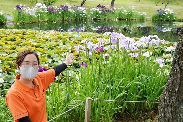 小田原フラワーガーデンの花菖蒲・睡蓮・紫陽花と石田七緒子さん