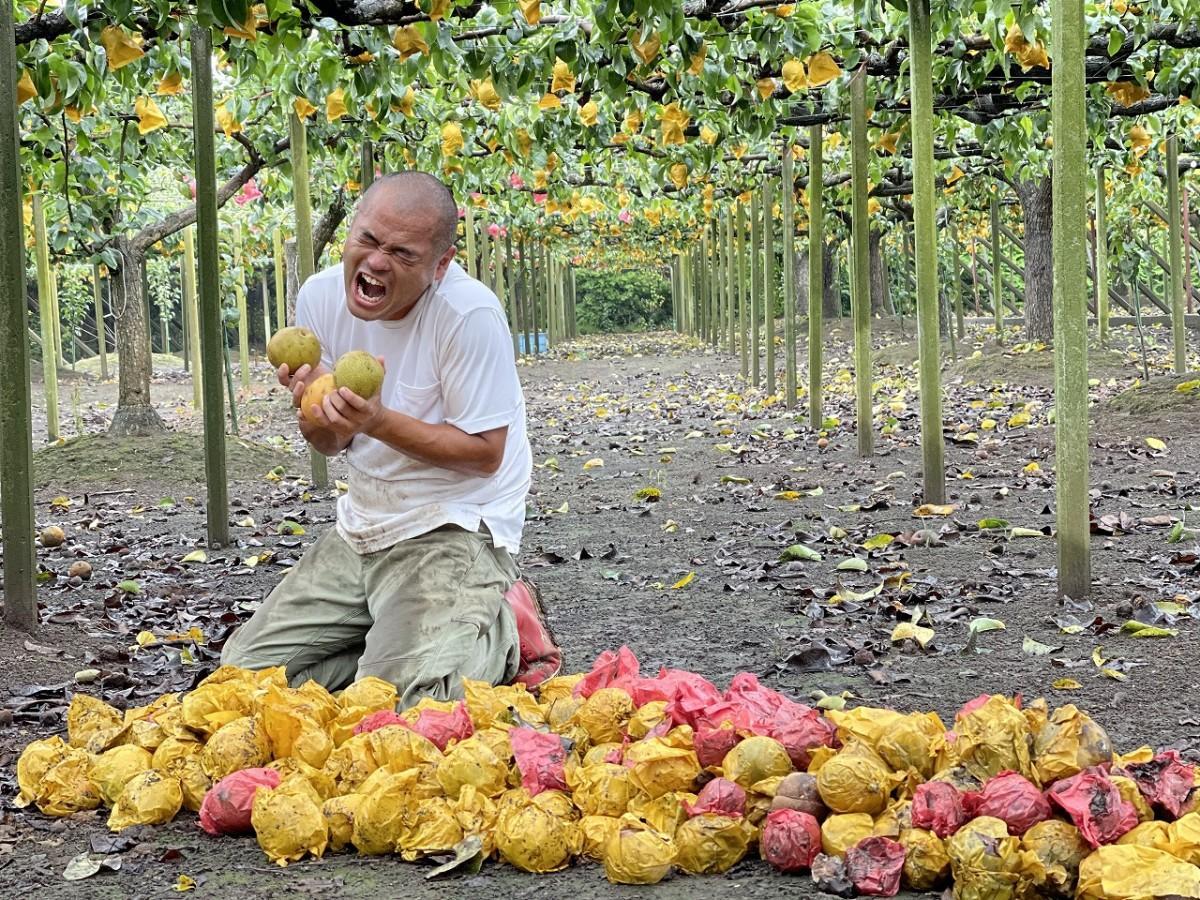 収穫しあふれる果汁に喜ぶ「春夏秋冬」の檀上貴史さん