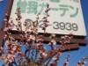 小田原で梅まつりに合わせ「曽我ガーデンパーティー」 こだわりの店舗出店