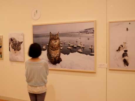 岩合光昭さん写真展「ねこ歩き」